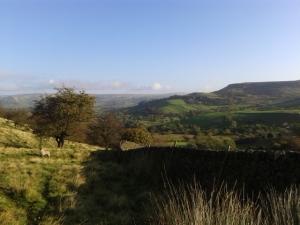 peaqk district sheep farm combs derbsyhire