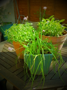 garden herbs for bread